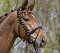 Kieffer Anja Bridle with Flash Noseband Best Price