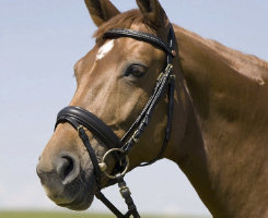 KiefferSwantje Bridle with Crank Noseband Best Price