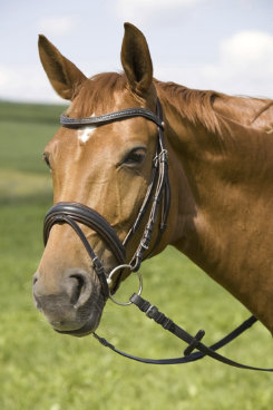 Kieffer Andromeda Snaffle Bridle with Flash Noseband Best Price