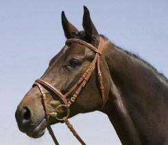 Kieffer Arlene Snaffle Bridle with Flash Noseband Best Price