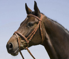 Kieffer Arlene Snaffle Bridle with Figure 8 Best Price