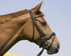 Kieffer Anastasia Snaffle Bridle with Flash Noseband Best Price