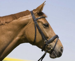 Kieffer Anastasia Snaffle Bridle with Crank Best Price