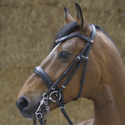 Kieffer Steffen Peters Double Bridle Best Price