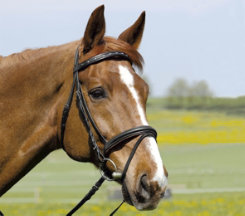 Kieffer Comfort I Snaffle Bridle with Flash Best Price