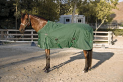 Kensington Roustabout Euro Cut Medium Weight Turnout Horse Blanket Best Price