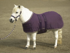 Kensington Miniature Horse Midweight Turnout Blanket Best Price