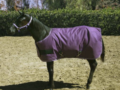 Kensington Yearling and Pony Midweight Turnout Blanket Best Price