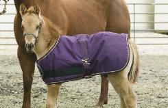 Kensington Foal Lightweight Turnout Blanket Best Price