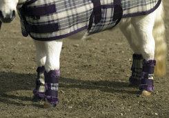 Kensington Miniature Horse Fly Boots Best Price