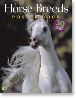 Horse Breeds  Poster Book Best Price
