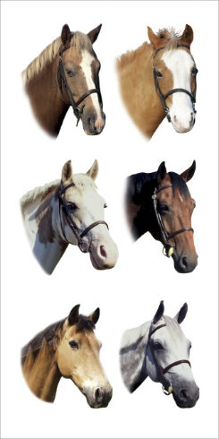 Kelley Colorful Horse Head Stickers Best Price