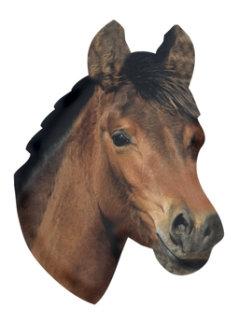 Kelley Horse Head Refrigerator Magnet Best Price