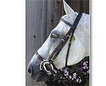 Nunn Finer Adjustable Lever Noseband