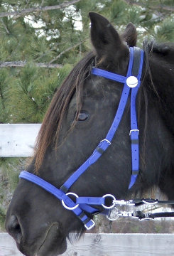 Nurtural Horse Synthetic Bitless Bridle Best Price