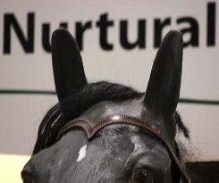 Nurtural Horse Impressive Leather Western Bitless Bridle Best Price