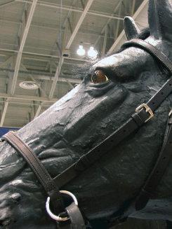 Nurtural Horse Ranchman Bitless Bridle Best Price