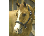 Perri's Chrome Hardware Soft Padded Leather Halter