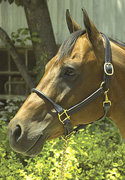 Perri's  Rolled Nose 1in Leather Halter Best Price