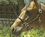 Perri's Rolled Nose 1in Leather Halter