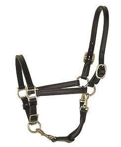 Perri's Leather Collection Convertible Grooming Halter