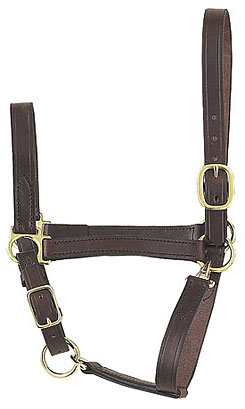 Perri's Economy Leather Suckling Foal Halter Best Price