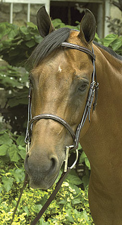 Perri's Leather Collection Havana Fancy Stitched Bridle