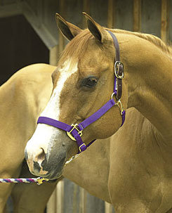 Perri's Leather Safety Halter Crown Piece Picture