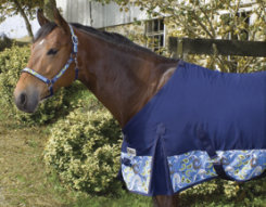 Perri's Paisley Dress Sheet Best Price