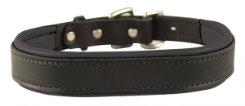 Perri's Padded Leather Dog Collar Best Price
