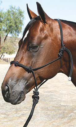 Professional's Choice Clinician Halter Best Price