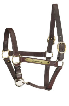 Perri's Custom 1 Track Halter with Adjustable Chin Best Price