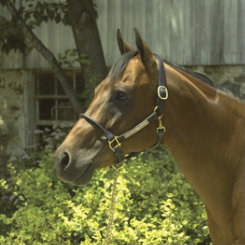 Perri's Custom 1 Rolled Nose Halter Best Price