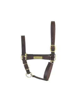 Perri's Custom 1 Economy Leather Halter Best Price