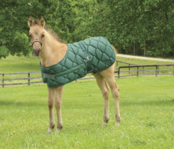 Lami-Cell Foal Blanket Best Price