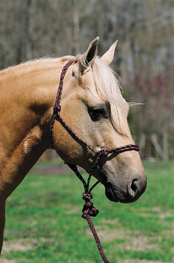Lami-Cell Mountain Rope Halter Best Price