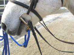 Sound Equine Easy Lunge Poly Lunge Line Best Price