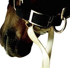 Sound Equine Easy Lunge Cotton Lunge Line Best Price