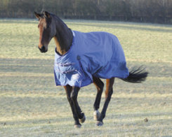 Shires Typhoon Heavyweight Horse Turnout Blanket
