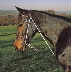 Shires De Gogue Training Martingale Best Price