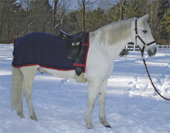 Saratoga Horseworks Fleece Exercise Rug Best Price