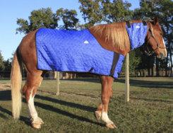 Techniche HyperKewl Evaporative Cooling Horse Blanket Best Price