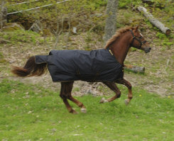 Bucas Irish Extra Heavyweight Horse Turnout Blanket Best Price