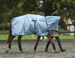 Bucas Rain Protector Horse Sheet Best Price