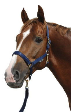 Bucas Polypropylene Halter Best Price