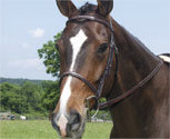 Collegiate Collection Fancy Raised Bridle with Reins