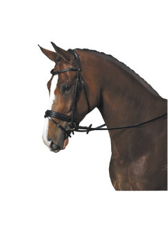 Bates Isabell Werth Apache Bridle Best Price
