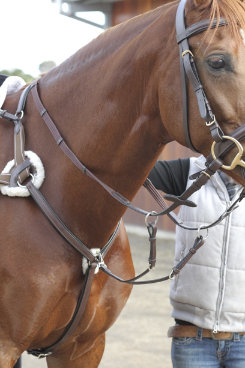 Collegiate 5 Point Breastplate Best Price