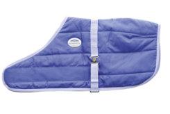 WeatherBeeta Newborn Foal Blanket Best Price