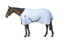 Kool Coat Cotton Standard Neck Horse Sheet Best Price